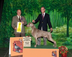 Group III - GCH. Ch. Silveroaks Surfcity Shades of Grey